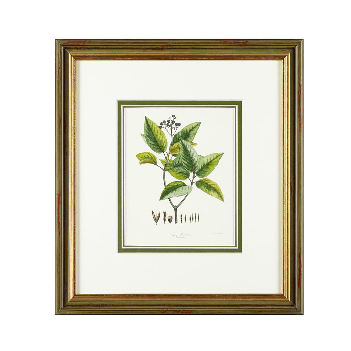 gaspard 绿植装饰画